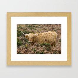 Highland Lad Framed Art Print
