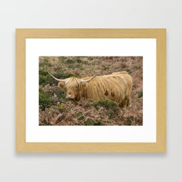 Highland Lad Framed Art Print