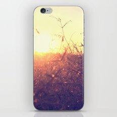 Evening in Summer iPhone & iPod Skin