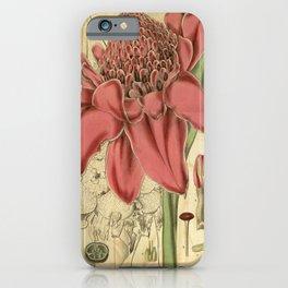 Flower 3192 alpinia magnifica Magnificent Alpinia1 iPhone Case