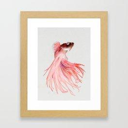 Betta splendens Framed Art Print