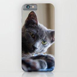 Russian Blue Kitten Portrait 5 iPhone Case