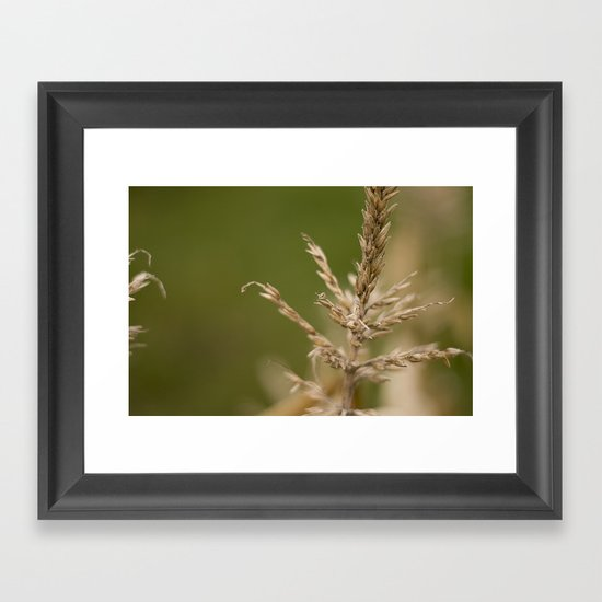 Macro Harvest Framed Art Print