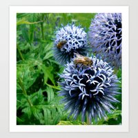 Honey Bee on Echinops Art Print