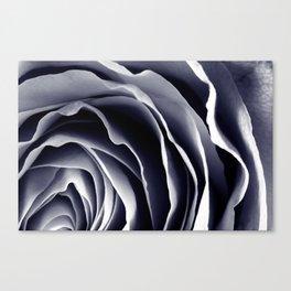 Purple Rose Macro Canvas Print