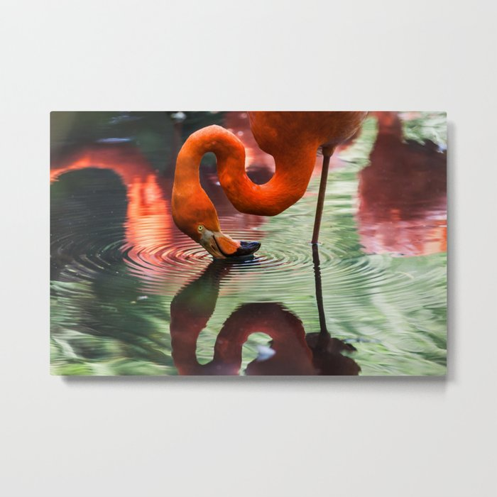 Tropical Flamingo Kiss Metal Print