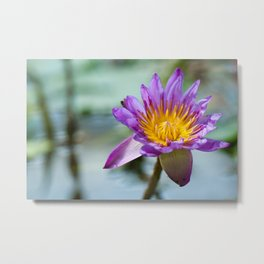 Blue Egyptian Water Lily 540 Metal Print