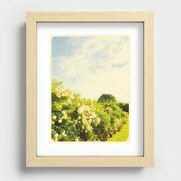 Hydrangea Bushes, Kennebunkport, Maine Recessed Framed Print