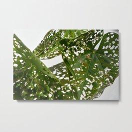 Leaf Light Group Metal Print
