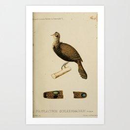 Bornean Peacock Pheasant polyplectron schleiermacheri Art Print