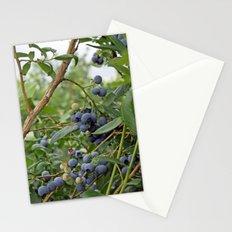 summer fruitful blueberry bushes. blueberry farm photography.  Stationery Cards