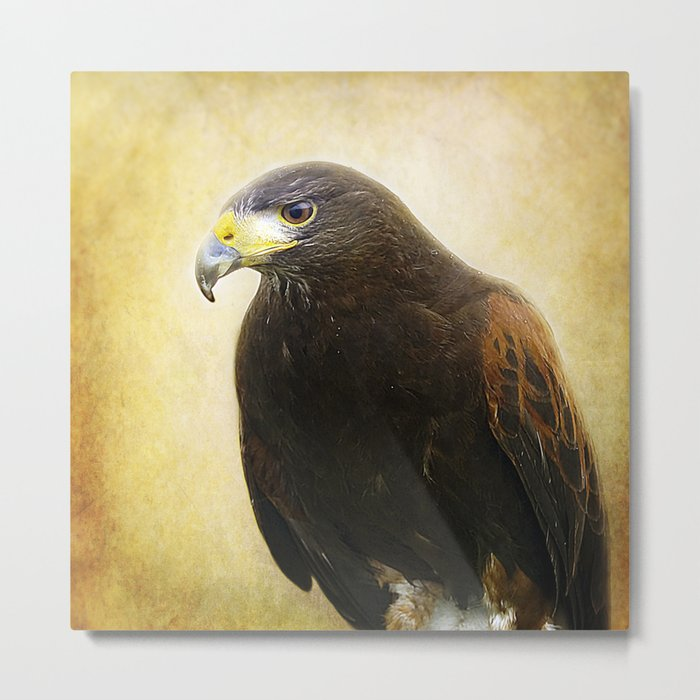 A Harris Hawk Metal Print