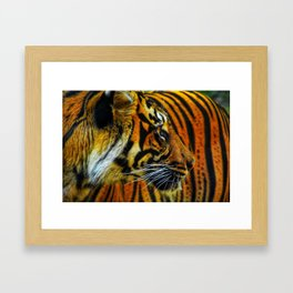 Looker Framed Art Print
