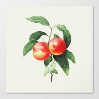 peach Canvas Prints featuring Peach by Grace
