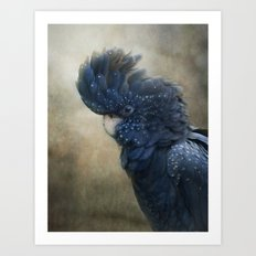 Black Cockatoo no 1 Art Print