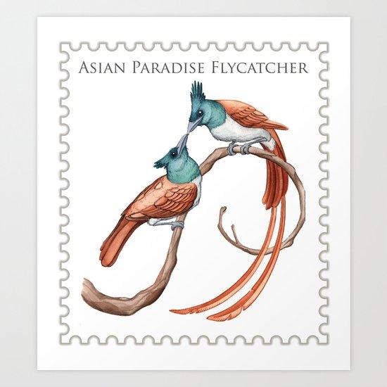 Asian Paradise Flycatcher (Terpsiphone paradisi) Art Print