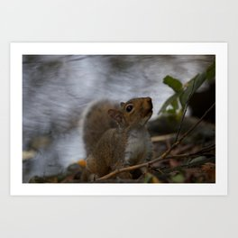 Another Pitville Squirrel Art Print