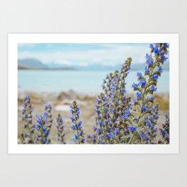 Lake Tekapo Flower Delight Art Print