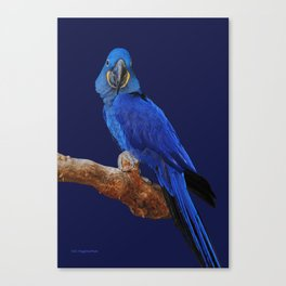 Prince of Parrots Canvas Print