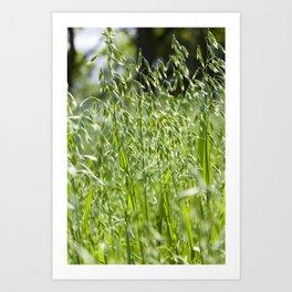 beautiful spikelets of oats Art Print