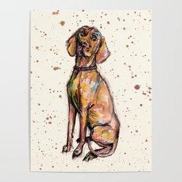Hungarian Vizsla Dog Poster