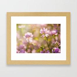 Wild pink Clover or Trifolium flowers Framed Art Print