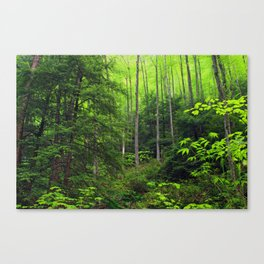 Forest Hill Canvas Print