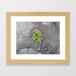 Nature always pulls through Framed Art Print