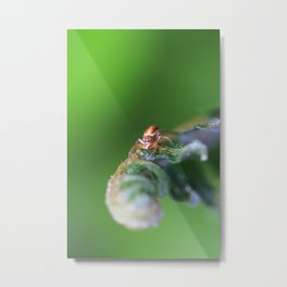 Spider Two Metal Print