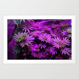Colorado Marijuana LED Grow Lights Art Print