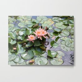 Pink Water Lilies and Turtle Metal Print