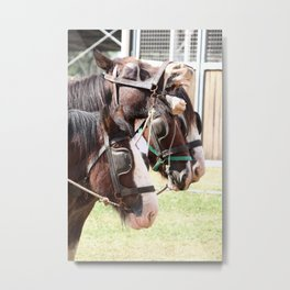 Clydesdales - Ready for Work Metal Print