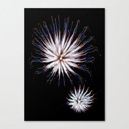 Firework Creations - Tulipfest 4 Canvas Print
