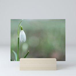 Snowdrop spring flowers close-up macro with selective focus Mini Art Print