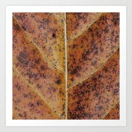 Dry old leaf Art Print