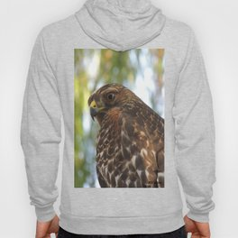 Young Red-Shouldered Hawk in a Desert Willow Hoody