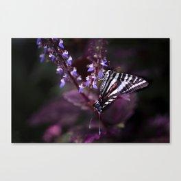 Zebra Striped Swallowtail Butterfly Canvas Print