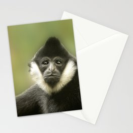 Colobus Monkey Stationery Cards