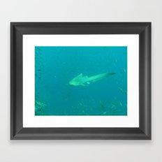 Leopard shark Framed Art Print