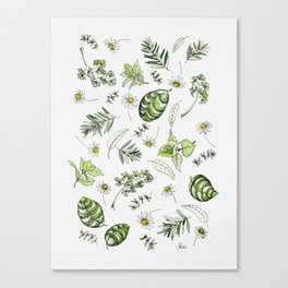 Scattered Garden Herbs Canvas Print