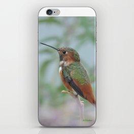 Allen's Hummingbird Sentinel iPhone Skin