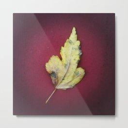 Leaf no. 2 Metal Print