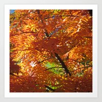 Fallbeauty/Orange Foliage Art Print