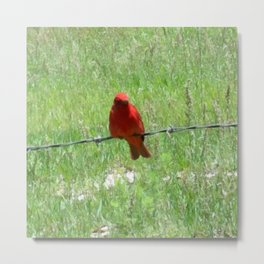 Red Summer Tanager on Barbed Wire Fence Metal Print