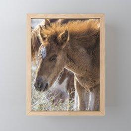 Salt River Sleepy Foal Framed Mini Art Print