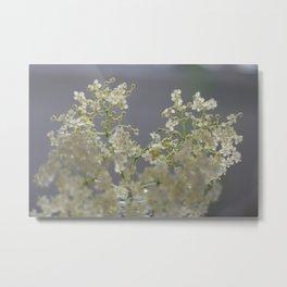 elderflower unedited Metal Print