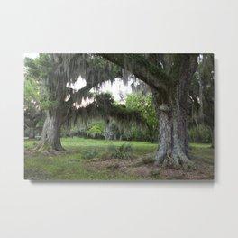 Oaks at Bayou Segnette, Louisiana, Southern United States, Fine Art Photo  Metal Print