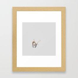 Iceland Reindeer Framed Art Print