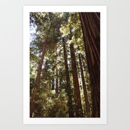 Redwood Forest XII Art Print