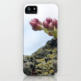 Cherry Blossoms 5 iPhone Case